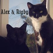 The Real-Life Super Cat Brothers, Alex and Rigby who live in Undy, Wales.